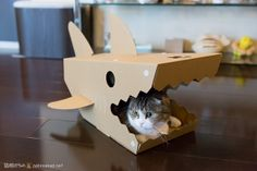 Pussywillow supervises the household from his cardboard shark house. Because what cat doesn't need a shark house? From nekoyanagi.net, the flickr of his person.