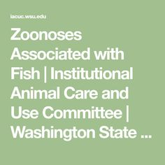 Zoonoses Associated with Fish | Institutional Animal Care and Use Committee | Washington State University Cat Scratch Disease, Fungal Infection Skin, Abdominal Distension, Swollen Lymph Nodes, Pregnant Cat, Disease Symptoms, Body Fluid