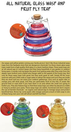 how to trap fruit flies fruit fresh
