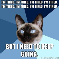 [picture of a cross-eyed Siamese cat's head against a gyronny (a triangle-sectioned background) with six shades of blue. Top line of text reads: I'm Tired. I'm Tired. I'm Tired. I'm Tired. I'm Tired. I'm Tired. I'm Tired. I'm Tired. || Bottom line of text reads: But I need to keep going.]