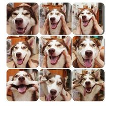 the various facial expressions of the DOG