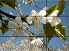 digital photography basics - 10 useful composition tips