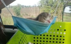 Veterinary Medicine, Natural Baby, Hanging Out, Cute Cats, Baby Animals, Outdoor Decor, Luxury Resorts, Fun Quotes, Hair