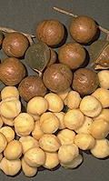Did NOT know Macadamia's were Australian native.  Interesting site about Australian native food plants.