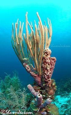 Sponge?