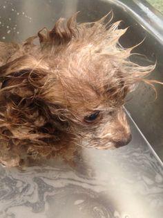 Chauncey bath time