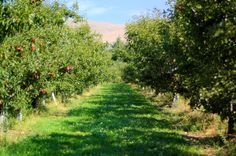 Best place to go apple picking: Terhune Orchards in Princeton, NJ