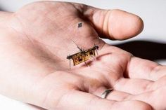 With the rapid advances in drone technology spanning the century, it should come as no surprise that robotics are being reinvented on the insect scale. Researchers claim robo-insects are cheap to produce and can easily slip into tight spaces. Drones, Drone Quadcopter, Robot Technology, Technology World, Science And Technology, Technology News, Beam Robot, Photovoltaic Cells, Cable