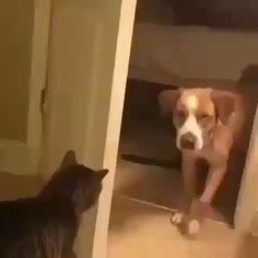 No dogs allowed - your daily dose of funny cats - cute kittens - pet memes - pets in clothes - kitty breeds - sweet animal pictures - perfect photos for cat moms Funny Animal Videos, Cute Funny Animals, Funny Animal Pictures, Funny Cats, Hilarious Pictures, I Love Cats, Crazy Cats, Cool Cats, Cute Kittens