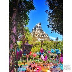 Live from Fantasyland #Disneyland