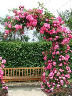 Garden Archways