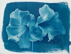 Cyanotype Tutorial