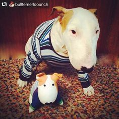 repost @bullterrierloounch  LOOUNCH and puppet LOOUNCH from Italy. Made by my friend.          #LOOUNCH  #BullTerrier #BullTerriers #BullTerrierLove #BullTerriersOfInstagram #ILoveMyBullTerrier || #EBT #EnglishBullTerrier #EnglishBullTerriers || #DogsOfInstagram #LandShark #MiniBull #MiniBullTerrier #MiniBullTerriers #MiniatureBullTerrier #MiniatureBullTerriers
