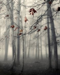 Autumn's End ..... Nicholas Bell Photography