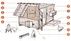 Construire un poulailler - Gallinette guide d'élevage de poules