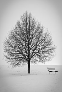black and white and bench
