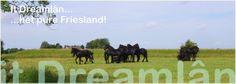 It Dreamlân - Natuur Kampeerterrein Friesland