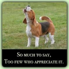 arroooo! I appreciate it. Beagles are better singers than most people auditioning for American Idol!