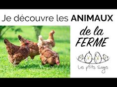 Activities For Kids, Animals, French, Ps, City Farm, Reading Games, Farm Animals, Dog, World