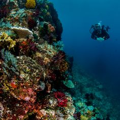 scuba - snorkeling #scuba #snorkeling #diving #reefs #underwater
