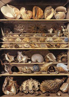Selection of Shells Arranged on Shelves - Alexandre-Isidore LEROY DE BARDE - French painter (b. 1777, Montreuil, d. 1828, Paris) -  Watercolour and gouache on heavy paper, 125 x 90 cm Musée du Louvre, Paris