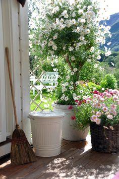 Hermosas macetas con flores para una entrada