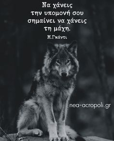 Greek Quotes, Way Of Life, Meaningful Quotes, Wise Words, Wolf, Love You, Let It Be, Jokes, Bullshit