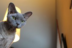Devon Rex Gibbs - published in prized photos by Aaron