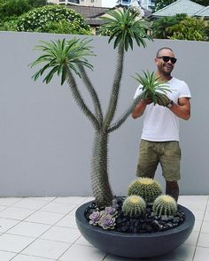 Created, supplied and designed by Beautiful Gardens Exotic Nursery NSW Australia Palm Trees Landscaping, Succulent Landscaping, Modern Landscaping, Garden Landscaping, Landscaping Design, Modern Landscape Design, Garden Landscape Design, Types Of Succulents, Cacti And Succulents