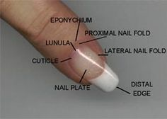 www.SimpleNailArtTips.com NAIL CARE: Natural Nails and Their Care.  A thorough site for all things related to nails written by Doug Schoon, author of Nail Structure and Product Chemistry.