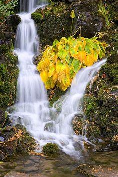 Crystal Springs Falls, Oregon; photo by Craig Tuttle