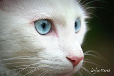 Fotografia de sofianeves | Olhares.com