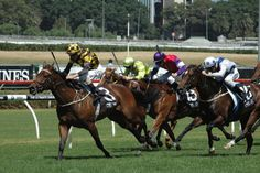 Griante (AUS) 2010 Br.m. (Good Journey (USA)-Grand Strategy (AUS) by Strategic (AUS) 1st ATC Wenona Girl H (AUS-G3,1200mT,Randwick) (photo: Racing and Sports)