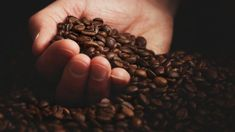 Granos de café Coffee Works, Food, Coffee Beans, Coffee Pictures, Studios, Art, Essen, Meals, Yemek