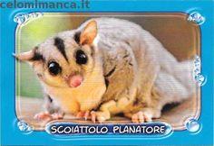 Amici Cucciolotti 2016: Fronte Figurina n. 200 Scoiattolo Planatore