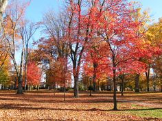 Learn about Bates College and What It Takes to Get In: Bates College Quad