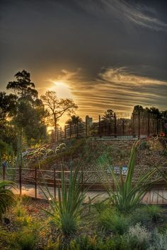 Melbourne-Daily-Photo-Blog-botanical garden- South Yarra-South-Yarra_20120224_64_5_6-Edit-2