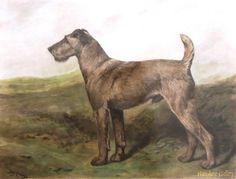 Irish Terrier standing in landscape John Emms Irish Terrier, Animal Paintings, Dog Art, Pet Portraits, Art Photography, Moose Art, Creatures, Terriers, Drawings
