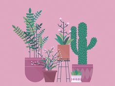 Some new plants! by Justin Middendorp