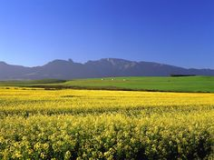 overberg images - Google Search