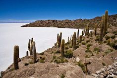 Once Salar de Uyuni and the surrounding area formed an enormous sea. Nowadays it is the largest salt flat in the world. This almost surreal world lies at an altitude of meters. Bolivia, Rock Formations, Beautiful World, Worlds Largest, South America, Monument Valley, Succulents, Landscape, Awesome
