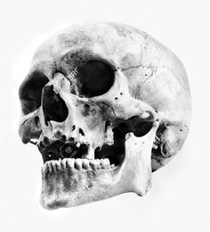 Skull Reference, Anatomy Reference, Figure Reference, Drawing Reference, Skull Tattoo Flowers, Skull Tattoos, Skeleton Bones, Skull And Bones, Skull Anatomy