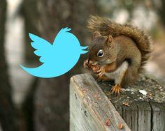 Tweeting for squirrels...