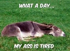 what a day my ass is tired, donkeys jackasses, jackass, lying down in grass, funny quotes quote lol funny quote funny quotes humor Funny Shit, The Funny, Funny Jokes, Funny Stuff, Funny Things, Funny Farm, Crazy Things, Daily Funny, Dad Jokes