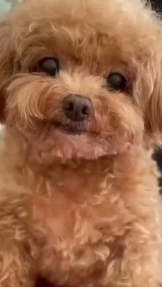Cute Baby Puppies, Really Cute Puppies, Super Cute Puppies, Baby Animals Super Cute, Cute Wild Animals, Cute Little Animals, Animals Beautiful, Cute Little Dogs, Cute Funny Dogs
