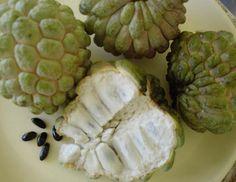 Anón se encuentra bastante distribuido en la región tropical y subtropical de América Latina.    El Anón es una fruta parecida a la chirimoya, con escamas exteriores muy pronunciadas, de forma oval recuerda el cono de los pinos.La pulpa es blanca, afrutada y cremosa con un marcado gusto a  canela. Muy nutritivo y digestivo.    Aporta una gran cantidad de minerales como el calcio y el fósforo.    También es importante su contenido en vitamina C.