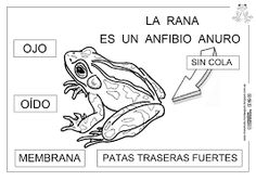 Resultado de imagen de la rana educacion infantil Animal Tattoos, Ecards, Memes, Life, Animales, Pet Project, School Ideas, Amphibians, Frogs