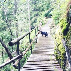 Alpe-Adria-Trail Trail, Stairs, Dog Food, Hiking, Stairways, Ladder, Staircases, Stairway, Ladders
