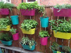 Our herb garden Garden Rack, Herb Garden, Garden Plants, Terrace Ideas, Garden Ideas, Porch Plants, Desert Landscape, Backyard, Patio
