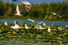 Danube Delta - Romania - A little slice of Paradise by Carmen Pitur on Hidden Places, Places To Go, Danube Delta, Danube River, Folklore, Beautiful Places, Paradise, Around The Worlds, Birds